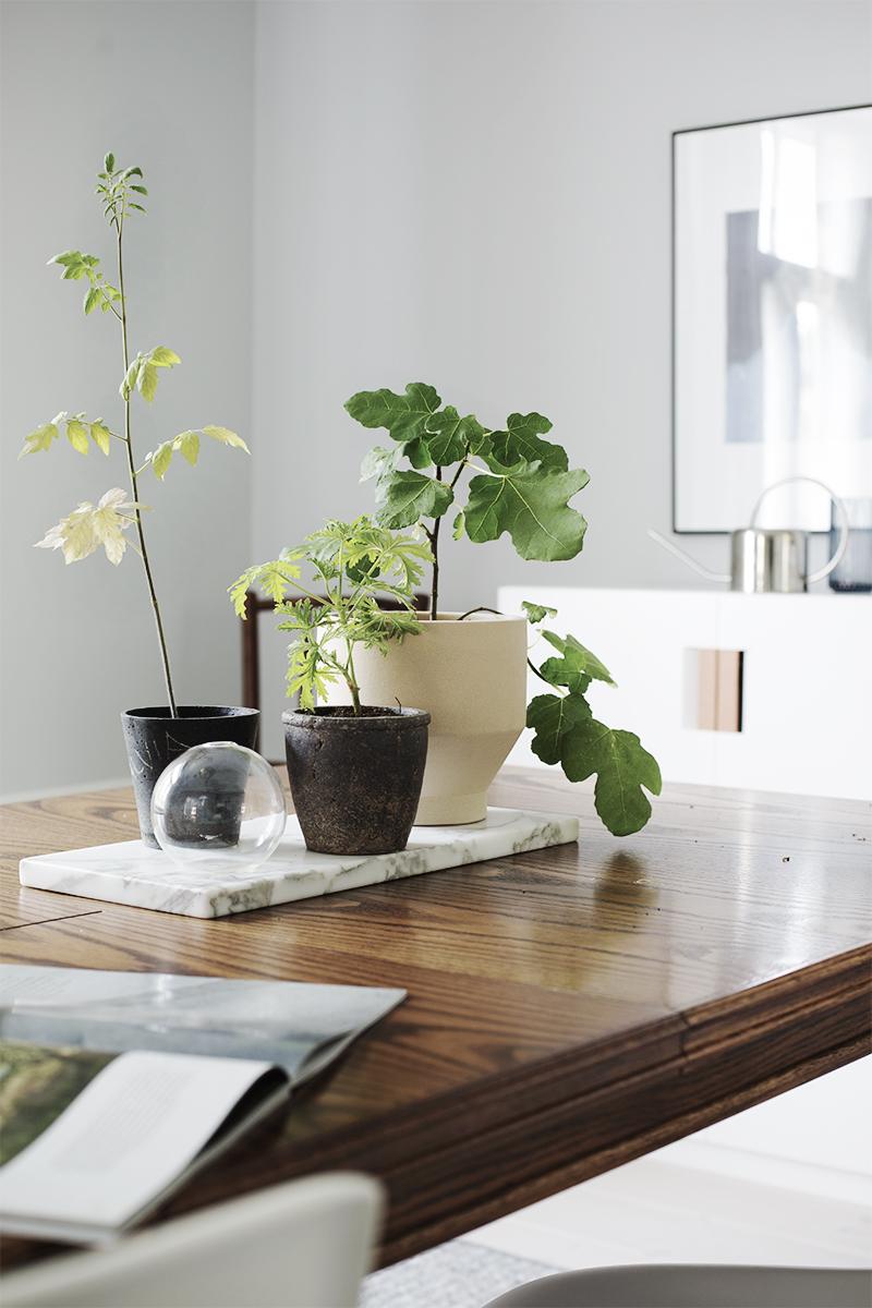 kasvit2-800